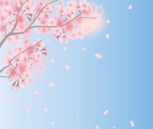 spring background, cherry blossoms, sky